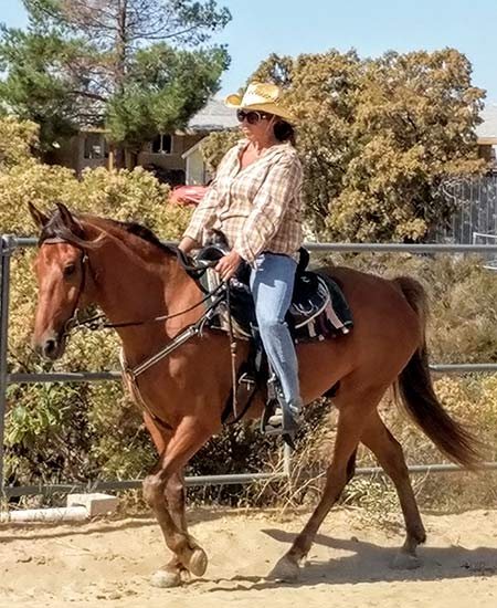 Reg Rocky Mountain Horse for sale in California