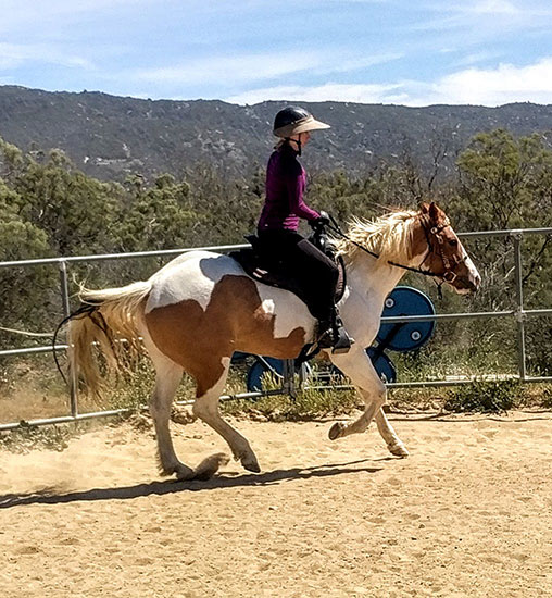 APHA Paint Mare for sale