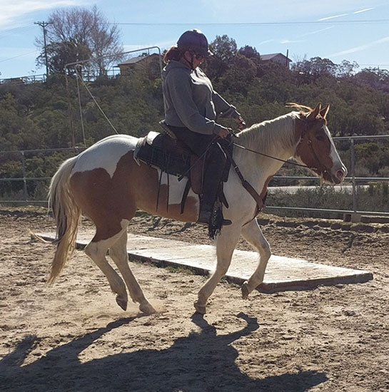 Horse sales southern california equestrian directory for Horse property for rent in southern california