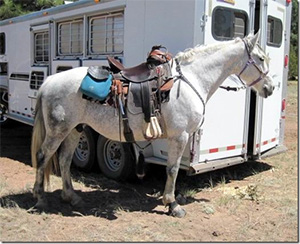 Gaited Horsemanship Clinic in Pinedale, AZ with Hope Adams of Double AA Ranch, Anza, CA